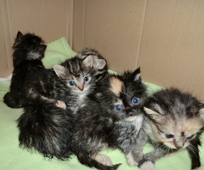 saint francis hospice rescue kittens 3