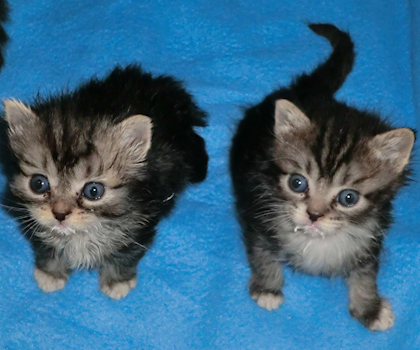 saint francis hospice rescue kittens 4